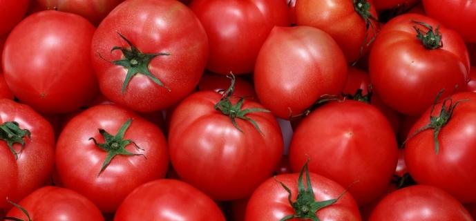 Посадка помидор в теплице
