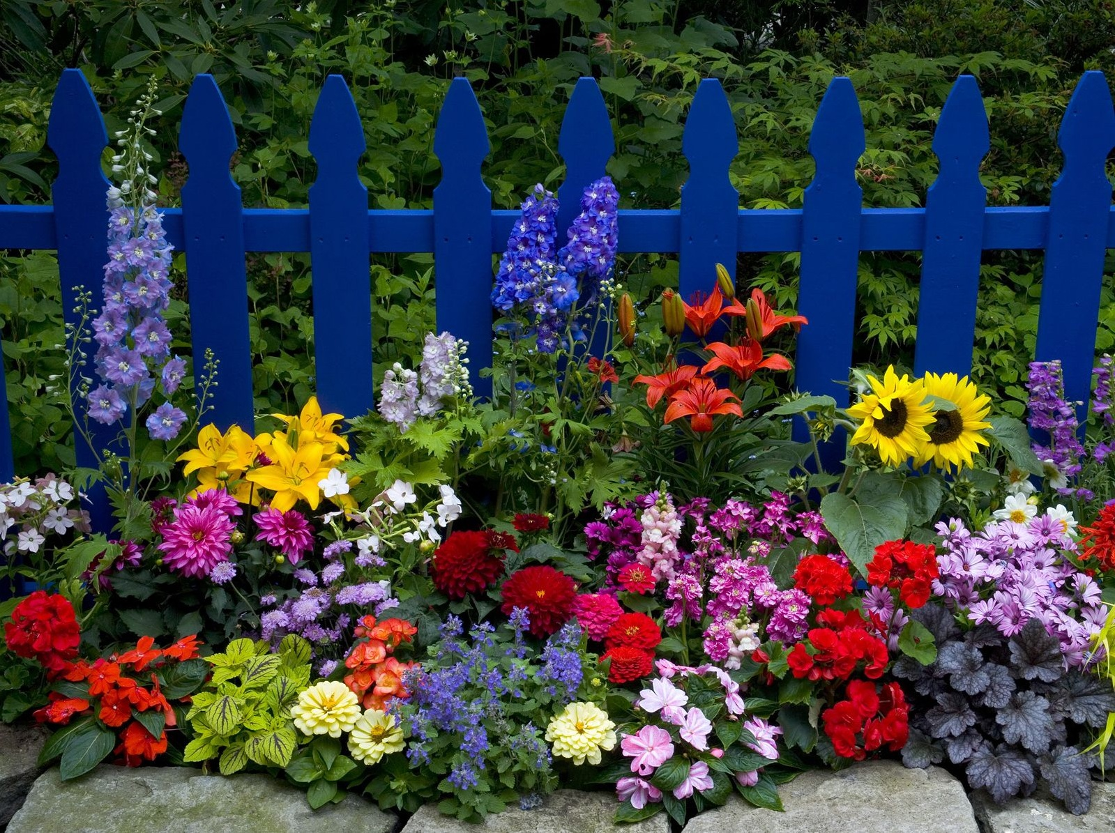 Средства продления жизни срезанных цветов