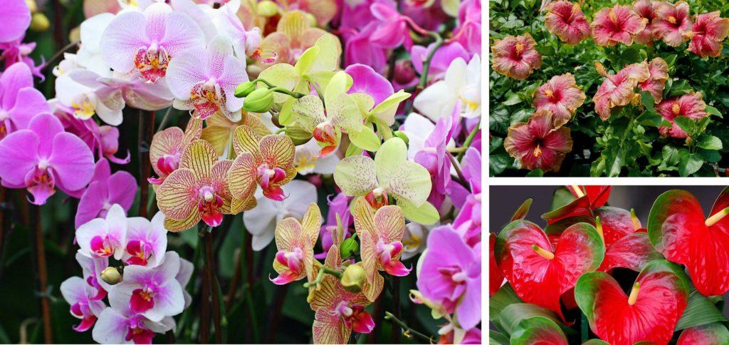 Цветы для зимнего сада