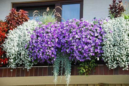 Комнатные цветы на балконе