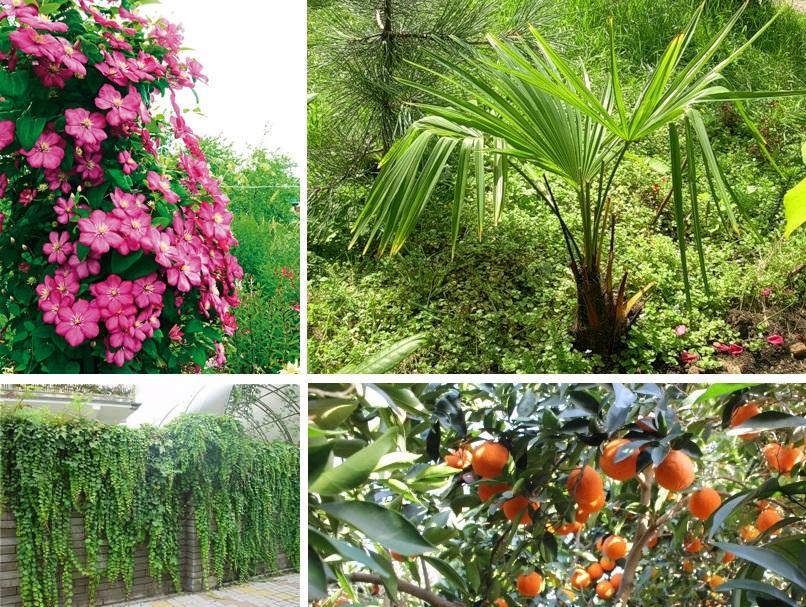 Растения субтропического региона
