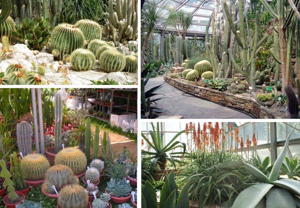 Растения засушливого региона