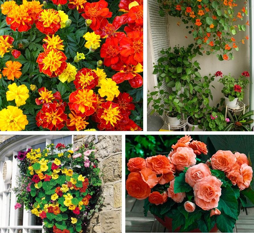 Тенелюбивые цветы на балконе