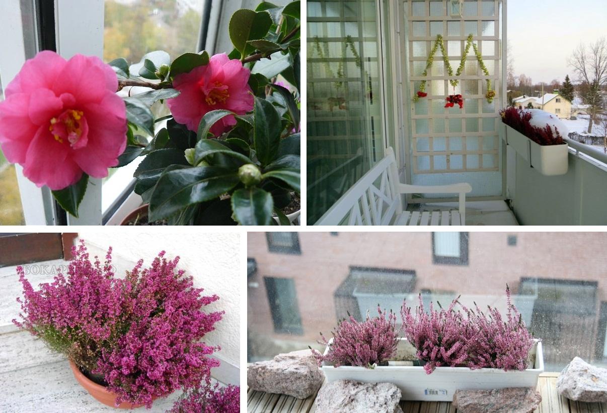 Цветы на балконе: практическое руководство.