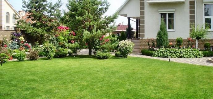 Создаем газон своими руками: выбор, обустройство и уход