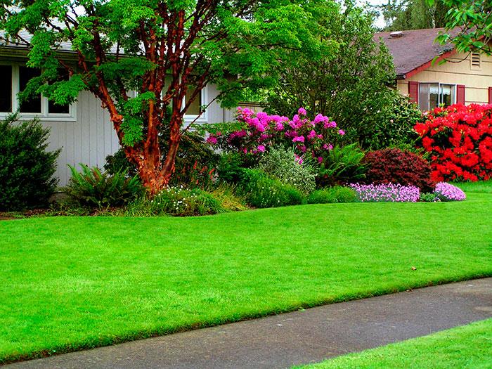 организовать газон на даче своими руками