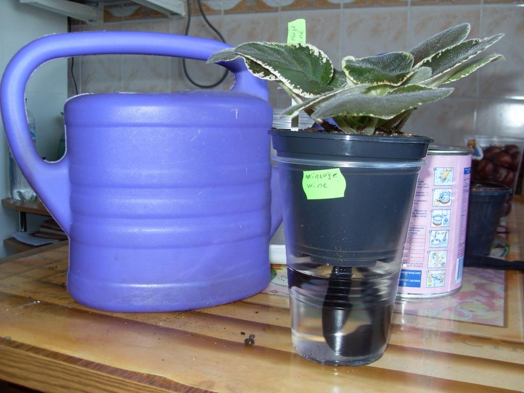 как поливать фиалки в домашних условия