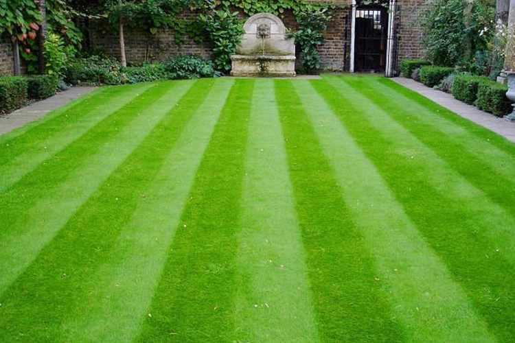 Английский (партерный) тип газона