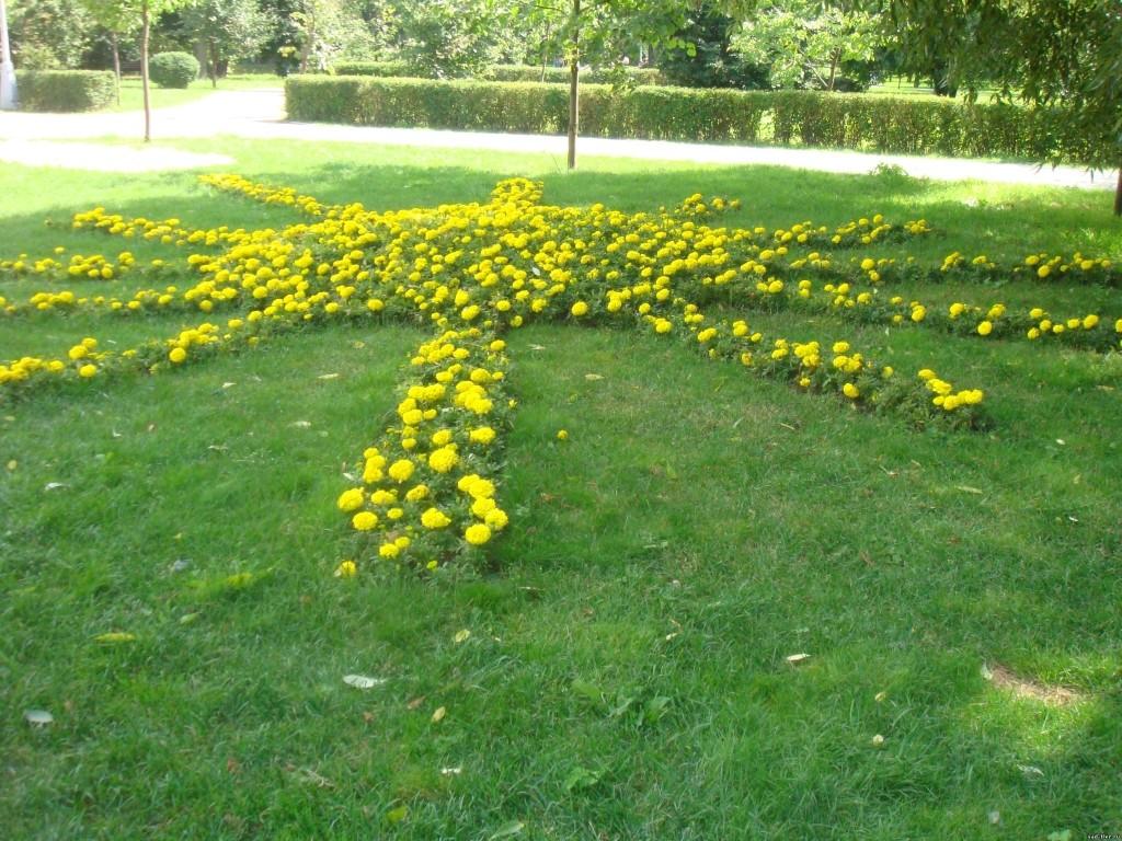 Цветочный тип газона