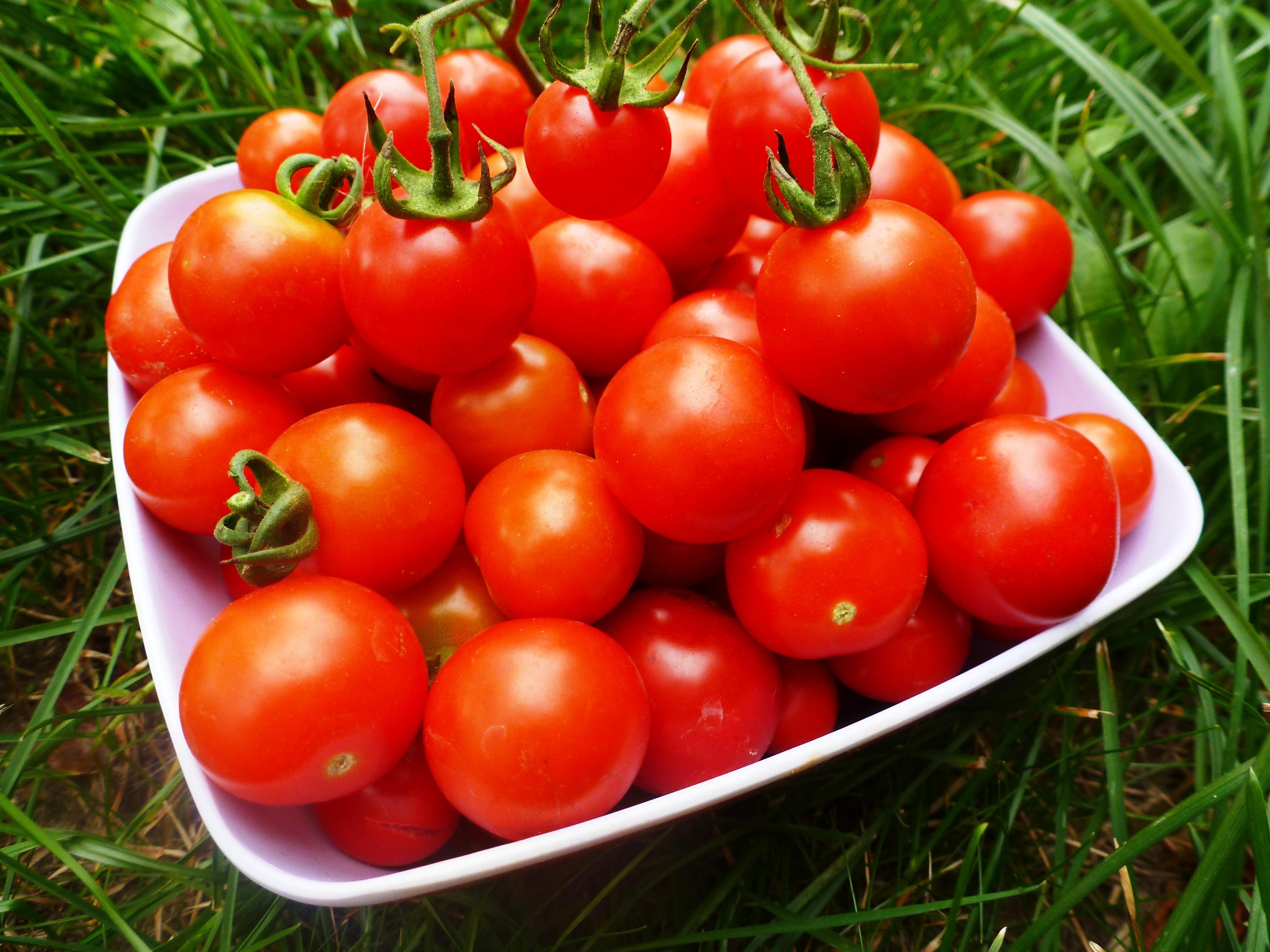 Как посадить помидоры?
