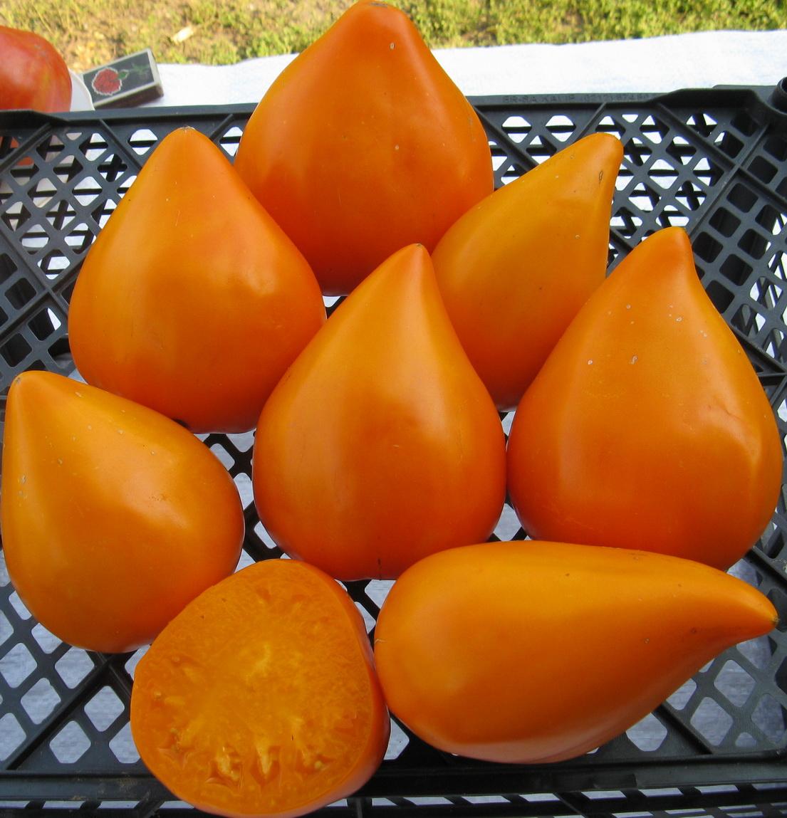 Земляника оранжевая