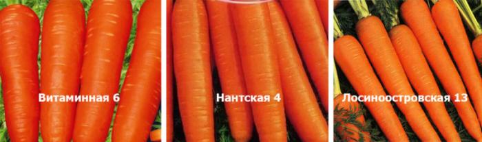 Какую морковь сажать осенью