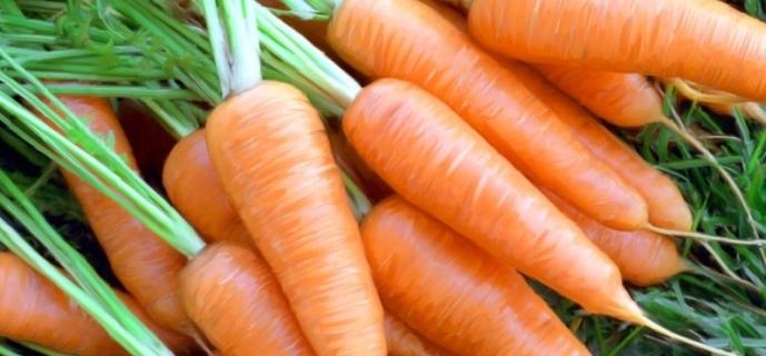 Как сажать морковь: от выбора семян до сбора урожая