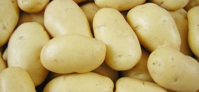 Сорта картофеля для ценителей вкуса и любителей урожая