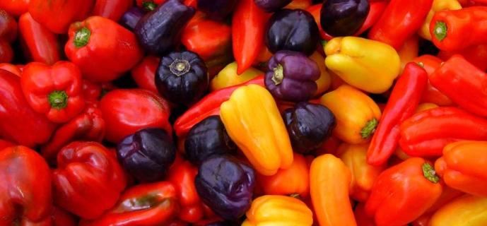 Рассада перца в домашних условиях: выращивание богатого урожая